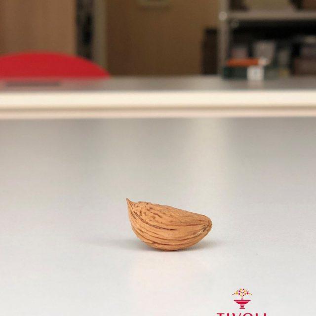 アーモンド収穫
